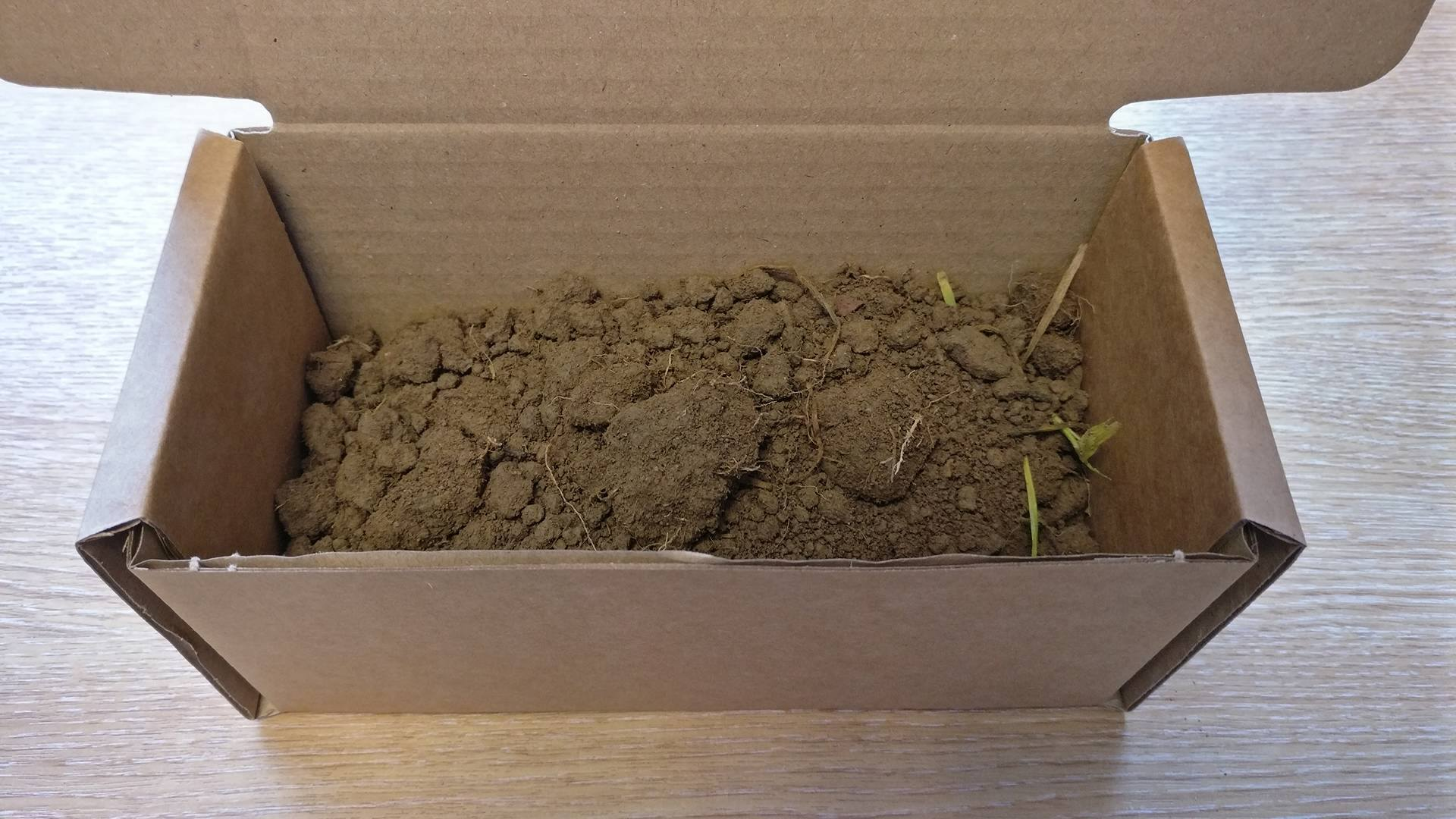 Example of Intermediate Soil Sample